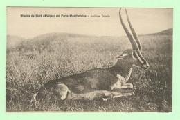 S1140- AFRIQUE - Mission Du Shiré Des Pères Montfortains - Antilope Inyala - Missions