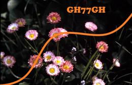 (dont Fleurs Et Flore) -LOT 20 DIAPOSITIVES ORIGINALES (collection Privée) -morilles - Dias
