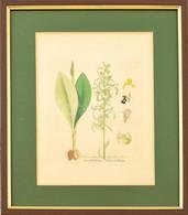 Virág. Színes Metszet, Papír. XIX. Sz. Üvegezett Fa Keretben, 17×14 Cm - Gravados