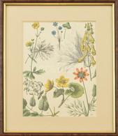 Növények, Virágok. Színes Metszet, Papír. XIX. Sz. Üvegezett Fa Keretben, 25×17,5 Cm - Gravados