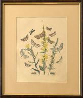 Pillangók és Hernyók, Színezett Litográfia, üvegezett Fa Keretben, Paszpartuban, 29x19 Cm, Keret: 37x32 Cm - Gravados