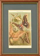 Seidenspinner (selyemhernyók), Színes Litográfia, üvegezett Fa Keretben, Paszpartuban, 22x14 Cm, Keret: 34x26 Cm - Gravados
