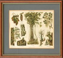 Epiphyten, Színes Litográfia, üvegezett Fa Keretben, Paszpartuban, Meyers Konv. Lexikon, 22x28 Cm, Keret: 34x40 Cm - Gravados