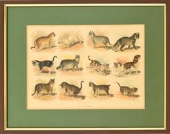 Katzenrassen (macskafajták), Színes Litográfia, üvegezett Fa Keretben, Paszpartuban, 21x28 Cm, Keret: 33x40 Cm - Gravados