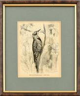 Aranyküllő (Colaptes Auratus), Fametszet, Jelzett A Nyomaton, üvegezett Fa Keretben, Paszpartuban, 14x12 Cm, Keret: 24x2 - Gravados