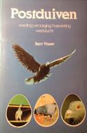 Postduiven - Voeding Verzorging Huisvesting Wedvlucht - Door Bert Visser - 1981 - Duiven - Non Classés