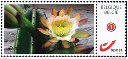 """Cactus """"Cereus Validus Haworth"""" - Personalisierte Briefmarken"""