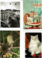 CHATS / Lot De 43 C.P.M. écrites - 5 - 99 Postcards