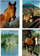 CHEVAUX - ÂNES / Lot De 90 C.P.M. écrites - 5 - 99 Postcards