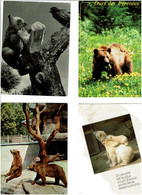 OURS / Lot De 43 C.P.M. écrites - 5 - 99 Postcards