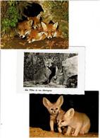 RENARDS / Lot De 40 C.P.M. écrites - 5 - 99 Postcards