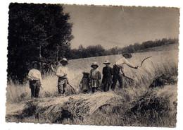Agriculture -- Cultures--Auvergne-- La Moisson ( Très Animée) ..............à Saisir - Cultivation