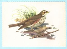 TIERE --- NIEDERLANDE - Vogel - Singdrossel --- AK Postcard Cover (2 Scan)(13910AK) - Uccelli