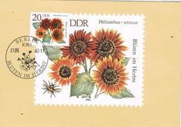 41745. Tarjeta Maxima BERLIN (Alemania DDR) 1982. Plants. Botanica. Helianthus - Maximumkaarten