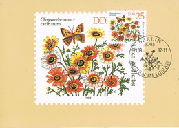 41746. Tarjeta Maxima BERLIN (Alemania DDR) 1982. Plants. Botanica. Crisantemo - Maximumkaarten