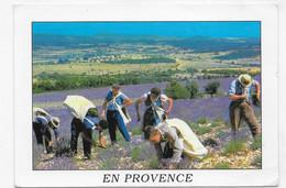 EN PROVENCE - COUPEURS DE LAVANDES - CPM GF VOYAGEE - 75 - Farmers