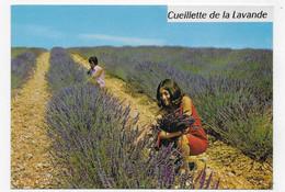 COTE D' AZUR - N° 25 - CUEILLETTE DE LA LAVANDE - CPM GF VOYAGEE - 75 - Farmers