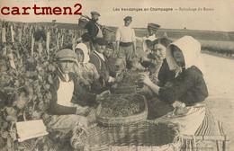 LES VENDANGES EN CHAMPAGNE EPLUCHAGE DU RAISIN VITICULTURE AGRICULTURE VIGNERON VITICULTURE - Wijnbouw