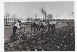 BRETAGNE D' HIER - N° 455 - LABOURS D' HIVER - Ed. D' ART JOS - CPM GF VOYAGEE - 75 - Farmers