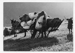 LES FOINS EN 1976 - N° 741 - CPSM GF VOYAGEE - 75 - Farmers