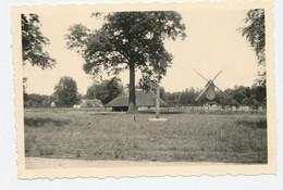 Originele Foto - Bokrijk 1962 - Molen - Lieux