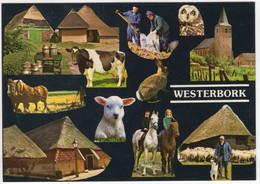 Westerbork - Boeren , Dieren, Vee - (Drenthe, Nederland)  - Nr. L 7536 - Otros