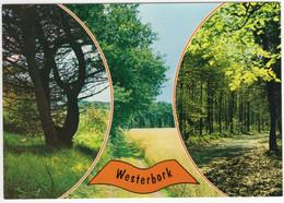 Westerbork - Bomen, Zandpad Langs Akker - (Drenthe, Nederland)  - Nr. L 8083 - Otros