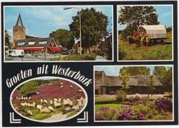 Groeten Uit Westerbork - Pony Huifkar, Kerk, Heide, SChaapskudde  - (Drenthe, Nederland)  - Nr. LA 7289 - Otros
