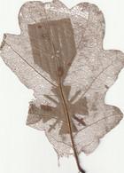 Travail De Poilu Feuille De Chêne ( Motif Médaille Militaire ) Rare - 1914-18