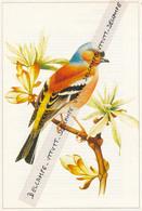 Fiche Illustrée : Oiseaux, PINSON DES ARBRES, Pinson Vulgaire, Fringilla Calebs L. - Animals