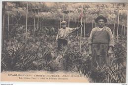 N°496  VAR.LA CRAU.ETABLISSEMENT D'HORTICULTURE JULES AUDIBERT.ABRIS DE PHOENIX REMANIES..LEMAIRE Phot.HYERES - Cultivation