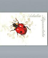Adalia Bipunctata - Insecte Abrité Par La Forêt Gabonaise - Editeur Shell Gabon - Insects