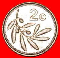 * OLIVE (1991-2007): MALTA ★ 2 CENTS 1993 MINT LUSTRE!  LOW START ★ NO RESERVE! - Malta