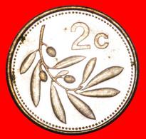* GREAT BRITAIN OLIVE (1991-2007): MALTA ★ 2 CENTS 2004 MINT LUSTRE! LOW START ★ NO RESERVE! - Malta