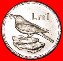 * GREAT BRITAIN BIRD (1991-2007): MALTA ★ 1 POUND 2005! MINT LUSTRE! LOW START ★ NO RESERVE! - Malta