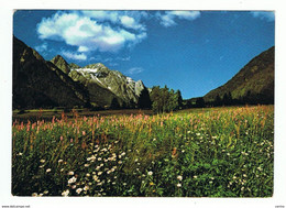 ALTA  VAL  ANTERSELVA:  PRATI  IN  FIORE  -  PER  LA  GERMANIA  -  FG - Bolzano (Bozen)
