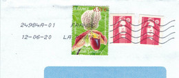 BST FK 24984 Frauenschuh - Paphiopedilum Mabel Sanders 2020 - Cartas