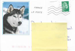 """Lettre   Avec Une Photo De """" Husky """"   Sur Timbre Autoadhésif  N° 1601   Daté Du 27 - 07 - 2021 - Cartas"""