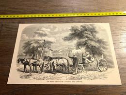 1859 Ill1 Les Petits Chevaux De L Ancienne Race Lorraine - Unclassified