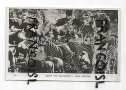 Photographie. Afrique Du Sud. Zèbres Et Animaux Sauvages De La Réserve Naturelle De Game. Glacée - Reproductions