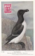 Carte Maximum Card Oiseau Bird Lundy 1957 Razorbill Petit Pingouin - Europe (Other)