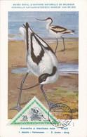Carte Maximum Card Oiseau Bird Hongrie 1952 Avocette à Manteau Noir - Maximum Cards & Covers