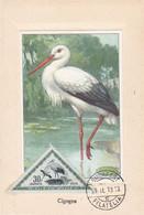 Carte Maximum Card Oiseau Bird Hongrie 1953 Cigogne - Maximum Cards & Covers