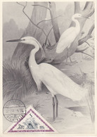Carte Maximum Card Oiseau Bird Hongrie 1952 Aigrette - Maximum Cards & Covers