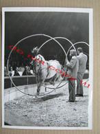 CIRCUS CIRQUE CIRCO ZIRKUS - The Horse Jumps Over Obstacles ( Photo 24 X 18,1 Cm ) - Circus