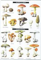 Mushrooms - Macedonian Postcard - Pilze