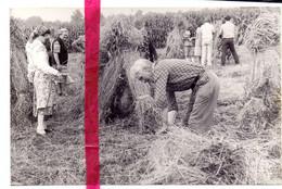 Foto Persfoto - Folklore Meerhout - Korenpikkers Uit Geel - 6 Aug 1981 - Sin Clasificación