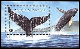 (015) Antigua  Fauna / Animals / Whales Sheet / Bf / Bloc Baleines / Wale ** / Mnh  Michel BL 554 - Antigua Y Barbuda (1981-...)