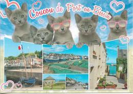 CHATS - COUCOU DE PORT-EN-BESSIN - 5 PETITS CHATS AVEC LUNETTES - 5 VUES - CPM - VIERGE - - Gatos