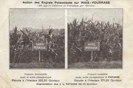 Action Des Engrais Potassiques Sur Maïs - Fourrage - CPM Neuve - Cultivation